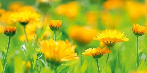 Biodynamic gardening workshop - 26th July