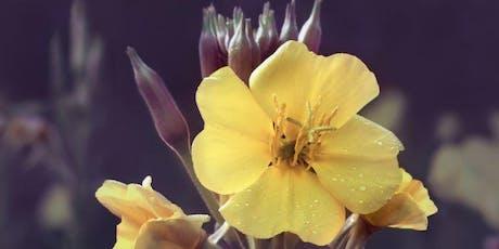 Biodynamic gardening workshop - 7th October tickets