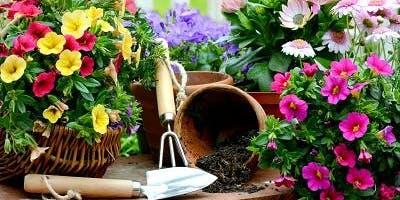 Jardinagem Orgânica 18/05/2019