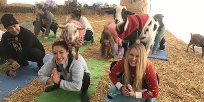 Goat Yoga Nashville- Get your Goat on