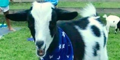 Goat Yoga Nashville- Super Bowl Kick off party
