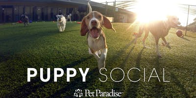 Pet Paradise Palm Beach Puppy Social 2019