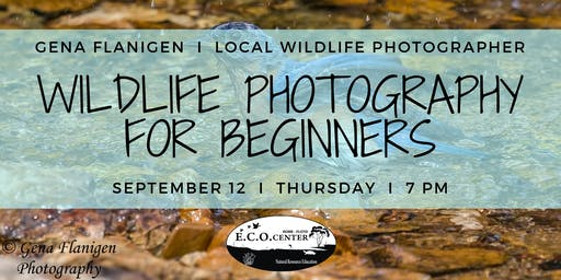 Wildlife Photography for Beginners