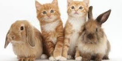 Rabbit and Cat Volunteer Orientation