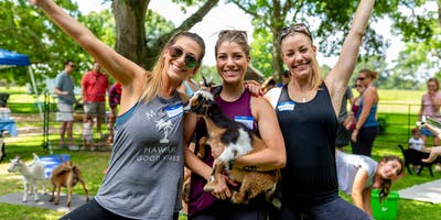 Goat Yoga Texas - Sun., Feb. 17 @ 2PM