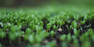 Microgreens - Eating Your Winter Urban Garden