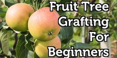 Fruit Tree Grafting for Beginners
