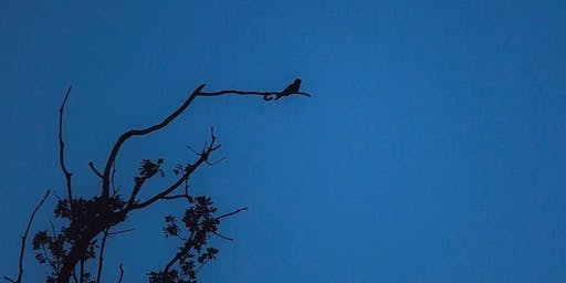 Nightjar Walks at RSPB Arne