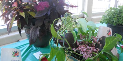 Container Gardening for Balconies and Patios. Ask the Expert Ian MCCullum of Woodhill Nurseries