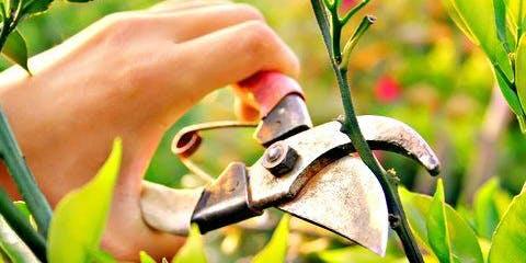 Pruning in Summer