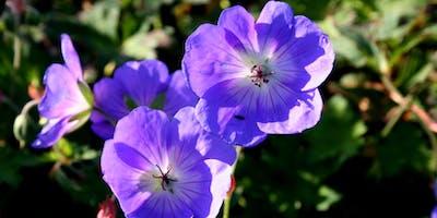Summer Powerhouse Perennials