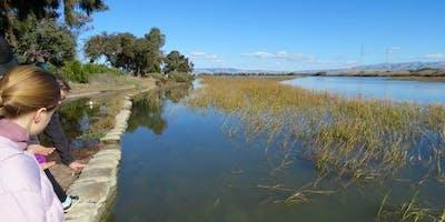 King Tide Walk - Palo Alto Baylands 1/20/19