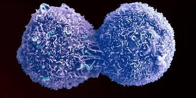 Studying Cancer One Cell Time