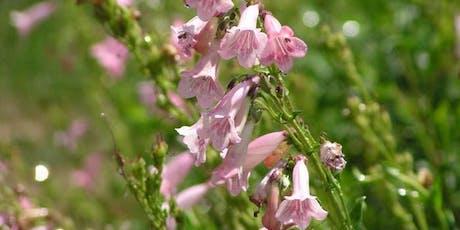 Flowers in Low-Water Gardens  tickets