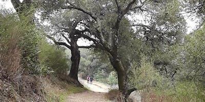 Napa Teens and Tweens Birding Hike - Westwood Hills Park