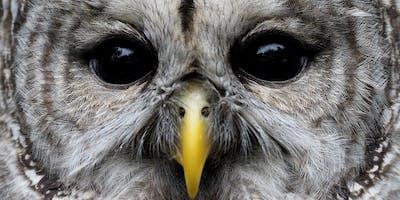 Bird Photography with Olympus & Steve Ball