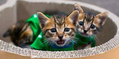 Meow & Mingle (Los Feliz)