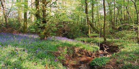 Moss Valley Woodlands Herbal Walk  tickets