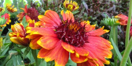 Perennials You Should Grow tickets