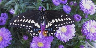 Butterfly Rescue Habitats