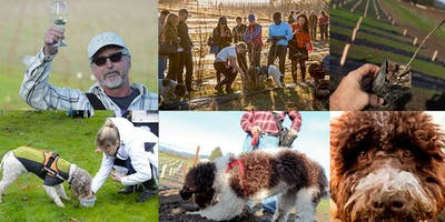 2019 Napa Truffle Festival - NEWLY ADDED! SATURDAY Truffle Orchard Tour and Dog Training Demo