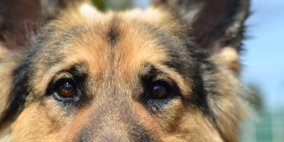 Dog Behavior - An Interactive Seminar