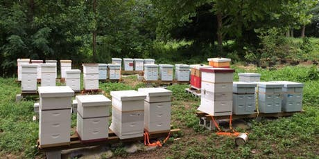 Brief Introduction to Keeping Honey Bees - October 5, 2019 tickets