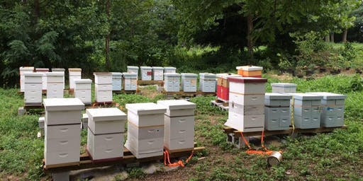 Brief Introduction to Keeping Honey Bees - October 5, 2019
