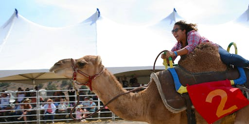 60th Annual International Camel & Ostrich Races Championship Sunday 9/8/19