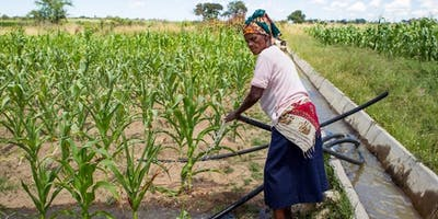 Transforming small-scale irrigation in Zimbabwe