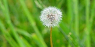 Water Saving Seminar: Weed 'Em and Reap: Weeds and Watering