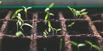 Planning Your Garden, Starting From Seeds