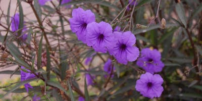 Invasive Plants in Pinellas County