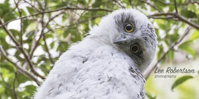 BirdLife Southern Queensland Owl workshop & training
