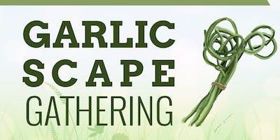 Garlic Scape Gathering