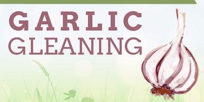 Garlic Gleaning