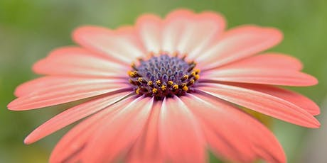 Photography Morning at Helmsley Walled Garden tickets