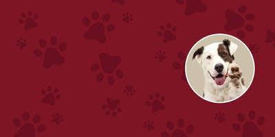 Pause For Paws - A Pet Adoption Event