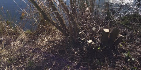 Coppicing at Hartshill Hayes Country Park tickets