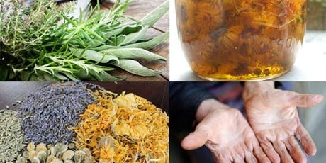 Herbal Medicine For Professionals - Fall 2019 tickets