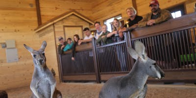 Kangaroo Experience with granola feeding (weekend)