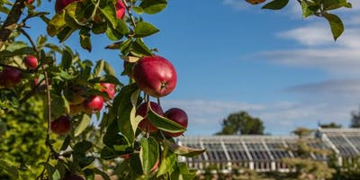 Introduction to summer fruit pruning