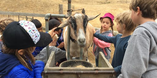 Summer Camp at Slide Ranch - Week 7: July 22-26 - Slide Explorers (5-8) & Jr Environmental Educators (14-18)