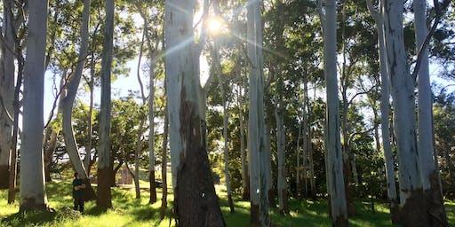 Urban Nature and Mindfulness Retreat