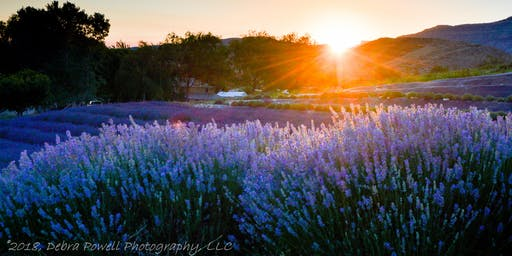 The Mindful Photographer Presents! Lavender Fields Forever