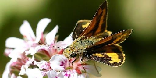 Green Living Biodiversity in your Backyard workshop