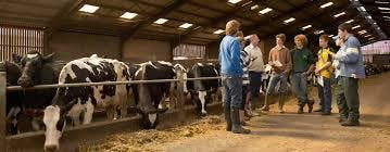 Intensive Training Program in Dairy Cattle Ha