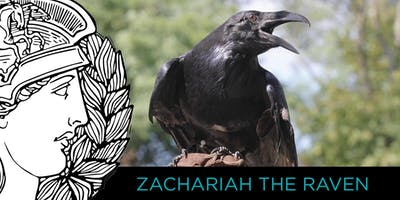 BIRD BRAINS WITH ZACHARIAH THE RAVEN