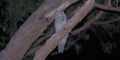 FREE Spotlighting - Fairfield's hidden nightlife