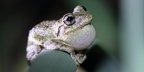 FREE Frogs - indicators of healthy environments tickets